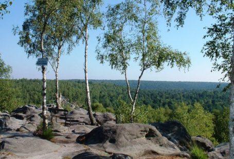 Fontainebleau Tourisme organise une balade guidée en #forêt de Fontainebleau, Samedi 16 Décembre à…