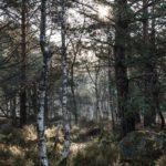 Magnifique forêt de Fontainebleau, où la lumière est toujours présente, même les mois d'automne.…