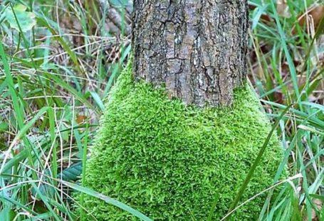 La forêt de Fontainebleau et ses secrets!