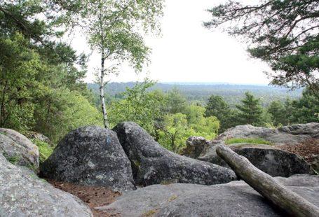 Visite en forêt avec un guide forestier Venez découvrir la forêt de Fontainebleau au…