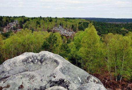 Partez à la conquête en forêt de Fontainebleau Samedi 17 juin, de 14h à…