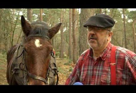 Découvrez ce beau reportage sur la forêt de #Fontainebleau, avec des chevaux utilisés pour…