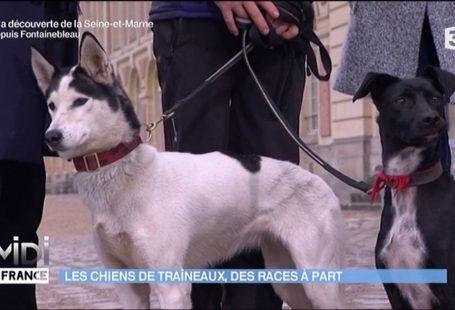 ** TOURNAGE ** Les chiens de traîneau en forêt de Fontainebleau à l'honneur dans…