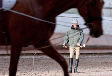 * VISITE * Venez découvrir avec nous les coulisses du célèbre Centre Sportif d'Equitation…