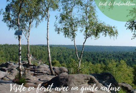 Visite en forêt avec un guide nature Les 3 et 24 août, laissez-vous guider…